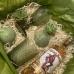 Оливковый набор для мужчины