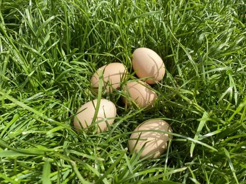 Яйца куриные домашние натурпродукт 10 шт