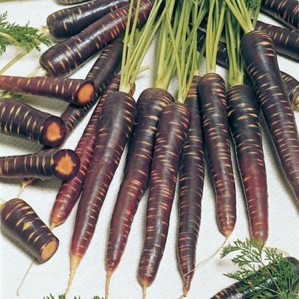 Морковь чёрная Голландия