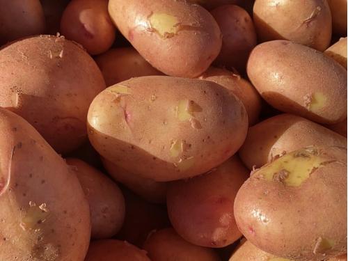 Картофель молодой розовый