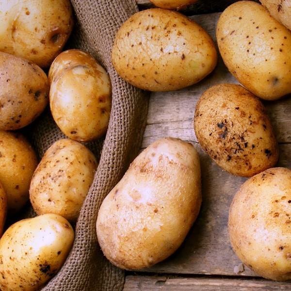 Картофель молодой тепличный крупный (Украина)