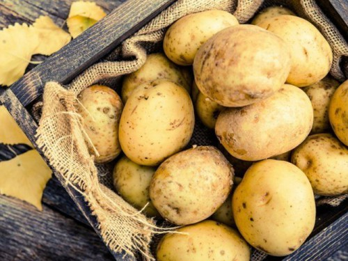 Картофель домашний Гранада