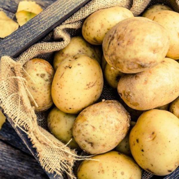 Картофель молодой тепличный средний (Украина)