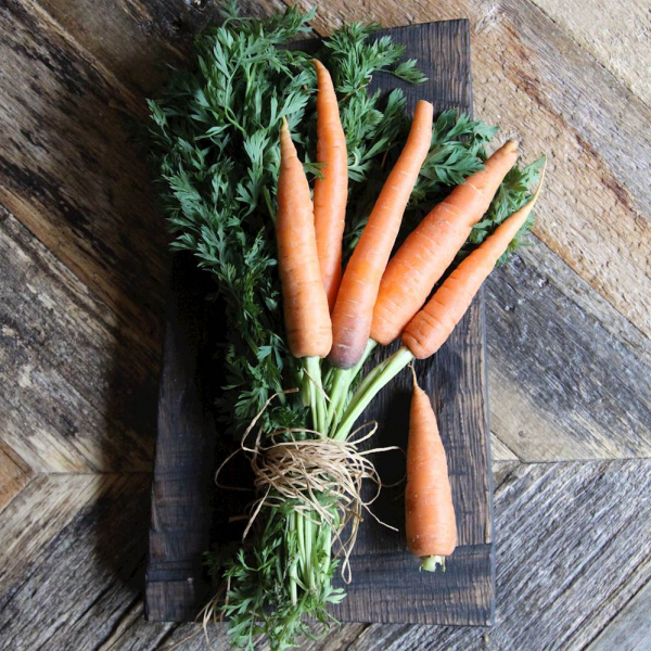Морковка  молодая