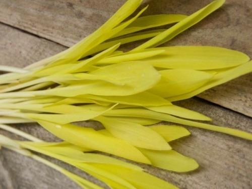 Микрогрин кукуруза 50 грамм